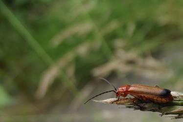It's A Bugs World
