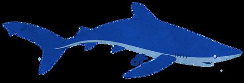Saturday's Shark - Blue Shark by shayfifearts