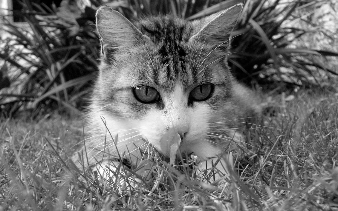 Cat by kidypad