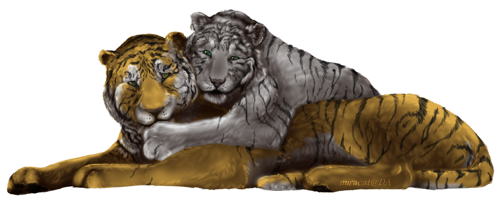 Tigers by Miracat