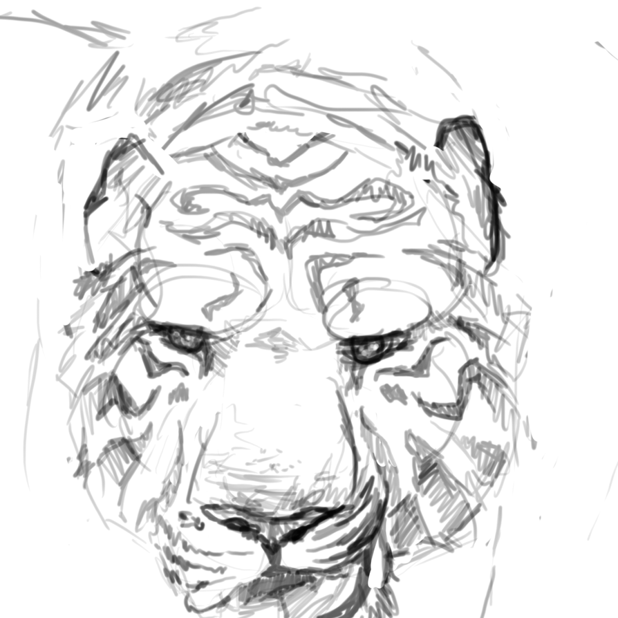 Tiger Face Sketch. by Miracat