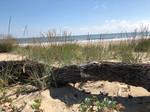 Beach  [01]