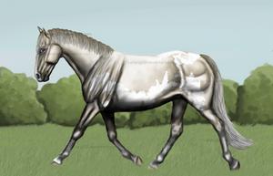 Silver Buckskin frame overo by Mustang601