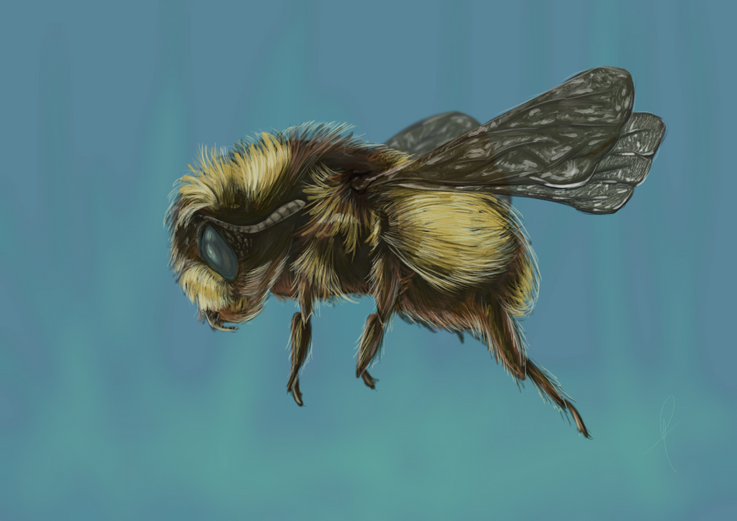 Bee Study by Br00dley