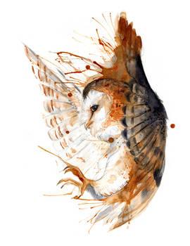 Barn Owl O Ka Fee