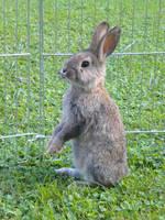 Nigel The Rabbit by Pelycosaur24