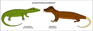 Synapsid Family resemblance