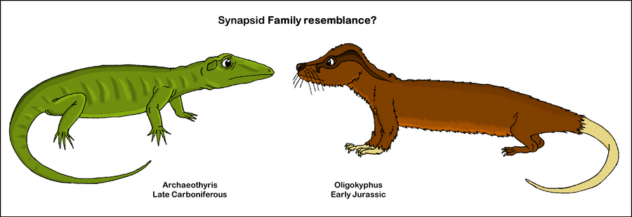Paleoexhibit: First among the synapsids: the ophiacodonts