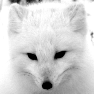 PolarfoxApp's Profile Picture