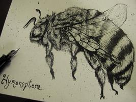 Hymenoptera by Krains