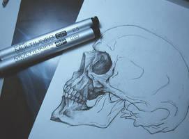 Skull study by Krains