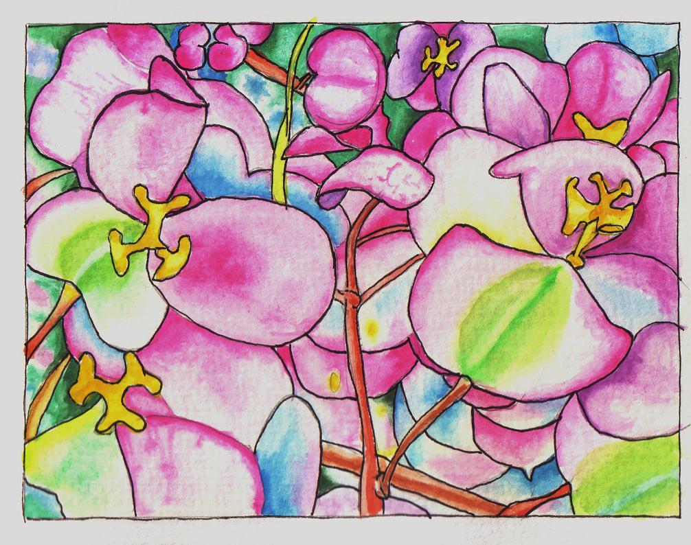 pink spring by rummsfeld