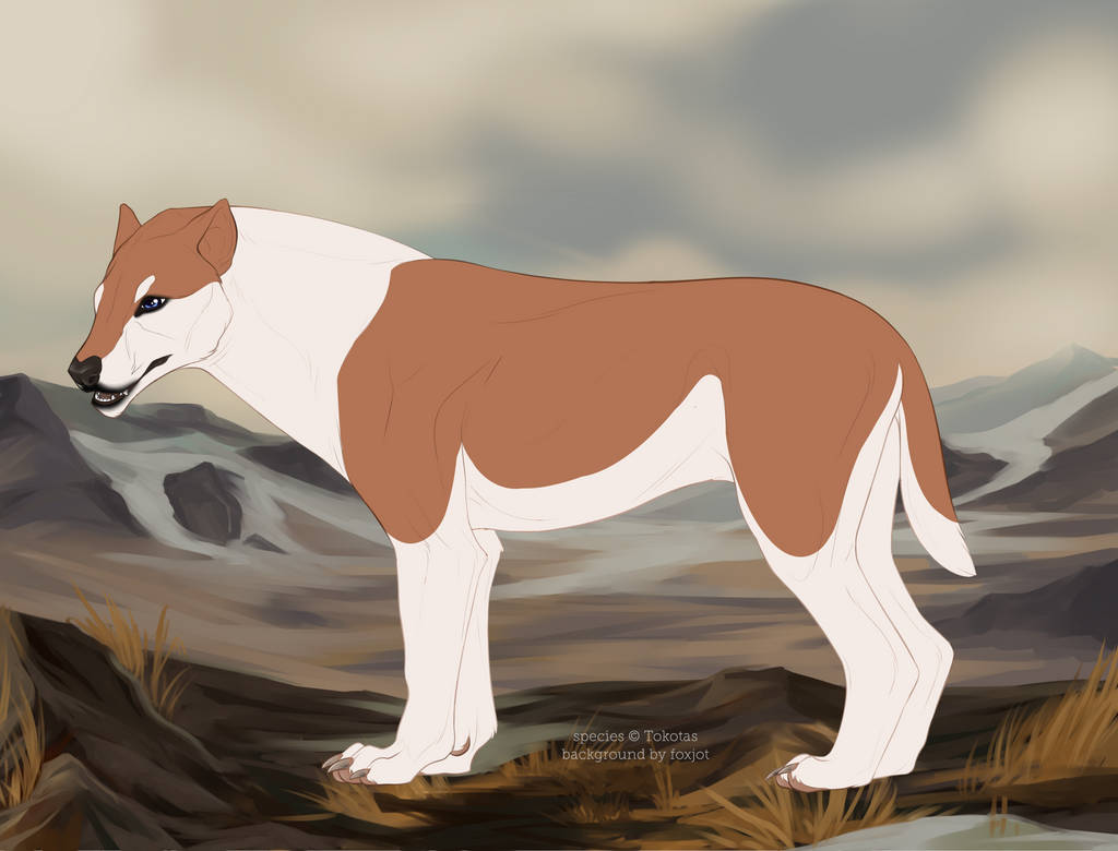 Tokota Sphinx Tawny
