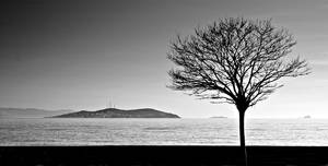 the tree and the island