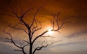 tree and sun by ugurers