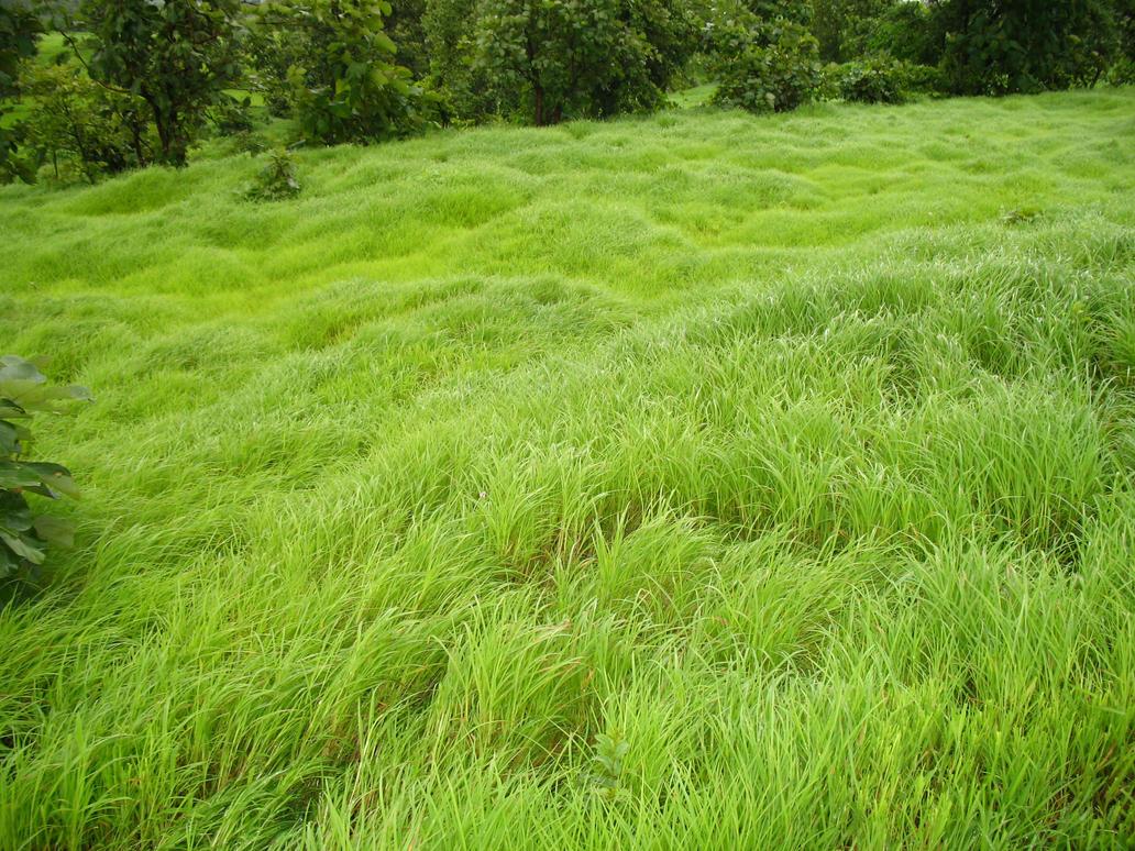Greenery by rahulgarware