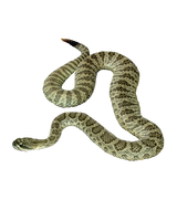 SNAKE PNG by Moonglowlilly