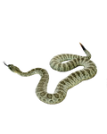 SNAKE PNG 2