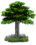 PNG TREE 2