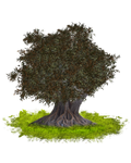 PNG TREE 3