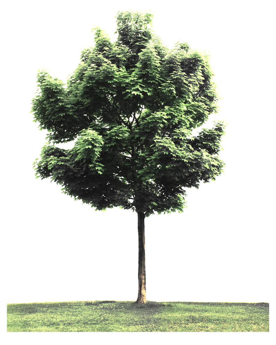 PNG TREE W by Moonglowlilly