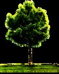 PNG TREE W