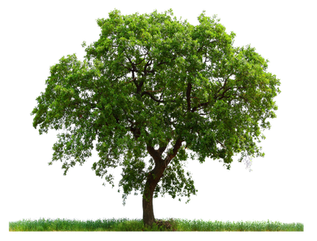 PNG TREE AB