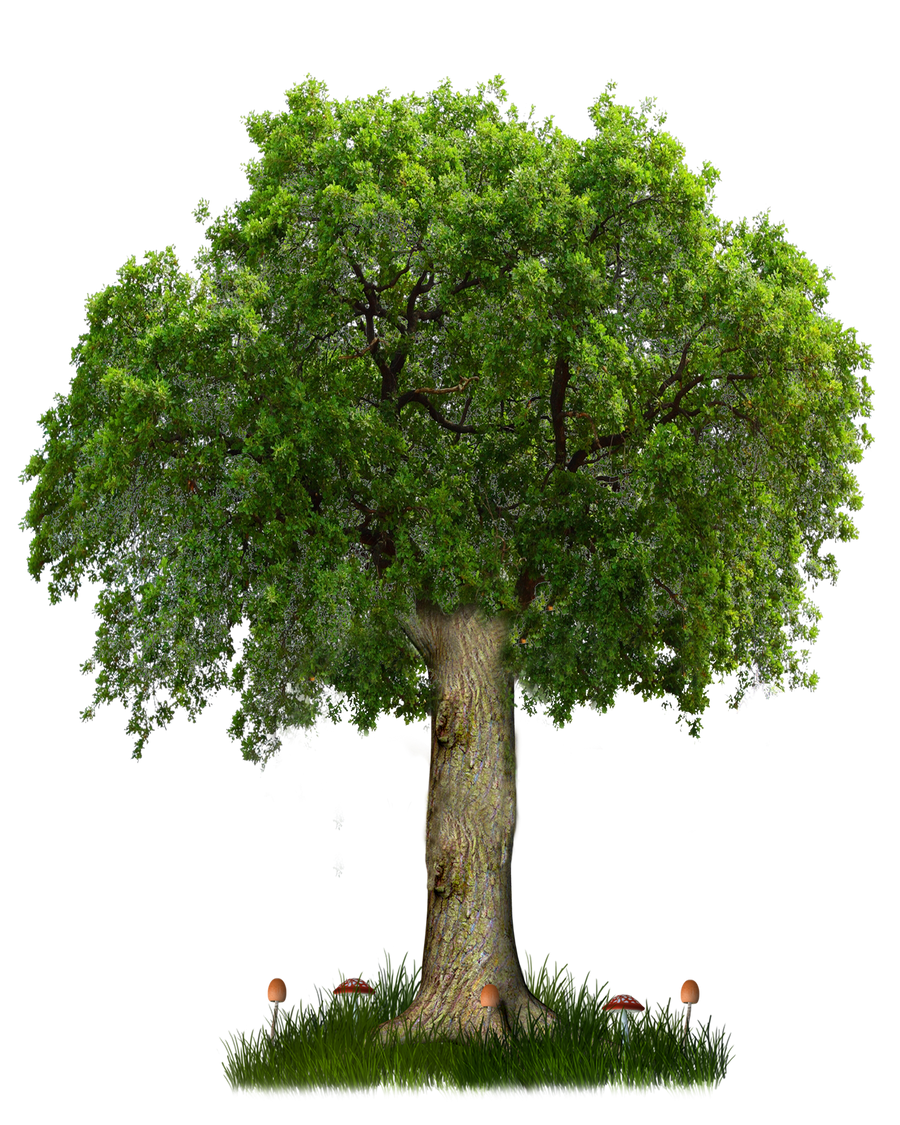 PNG TREE 8 By Moonglowlilly On DeviantArt