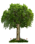 PNG TREE 8