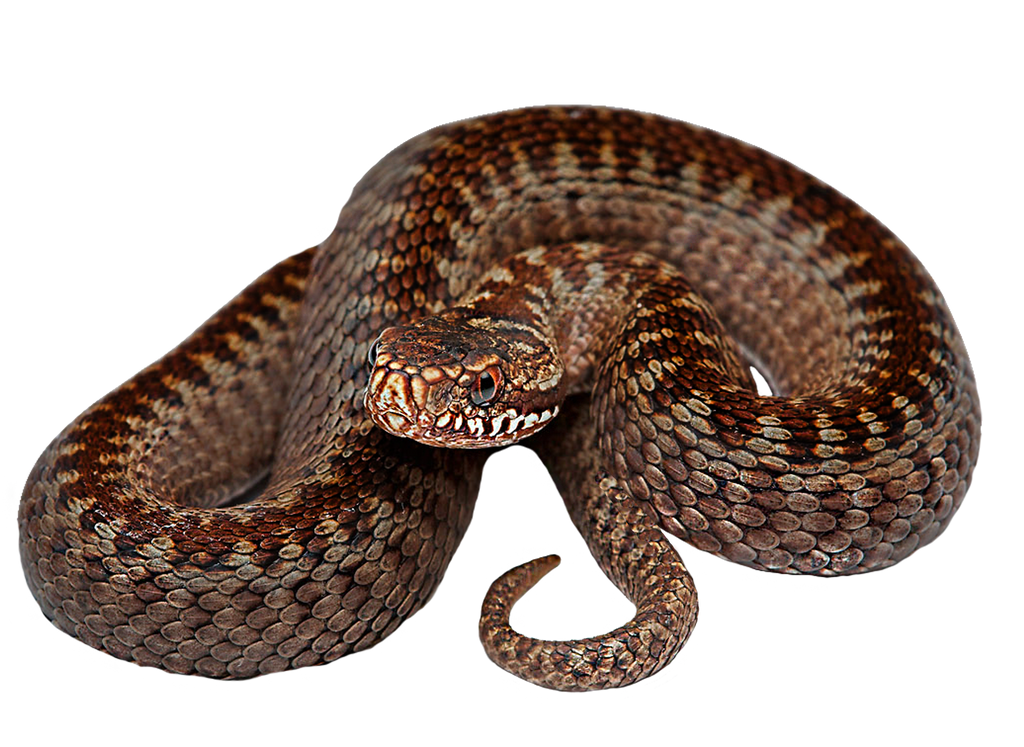 Snaky Png