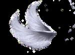 Wings Png 5