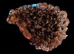 Png Hair 9