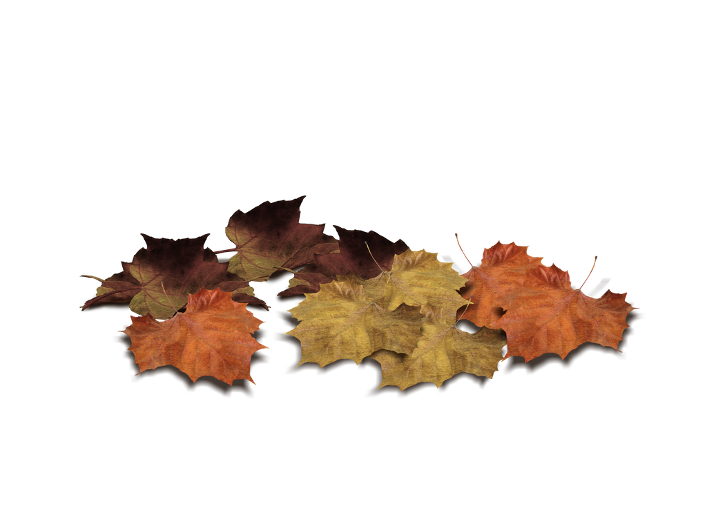 Png Leaves by Moonglowlilly