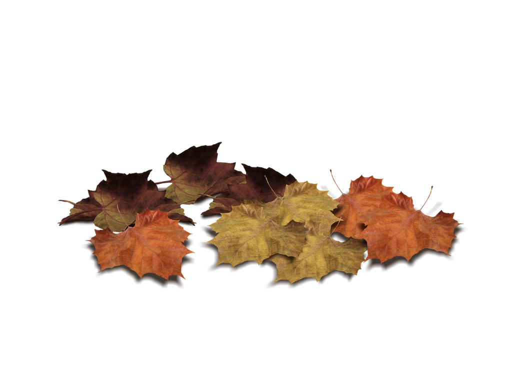 Png Leaves
