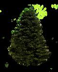 Pne Tree