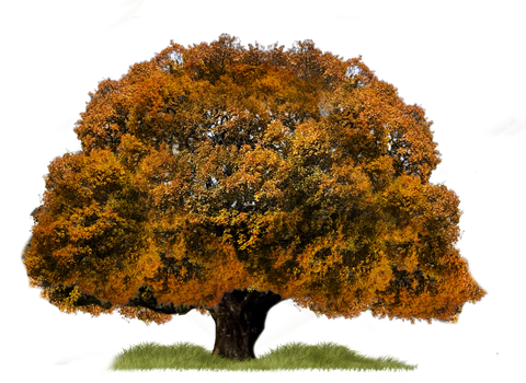 Png Tree