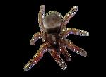 Png Bug