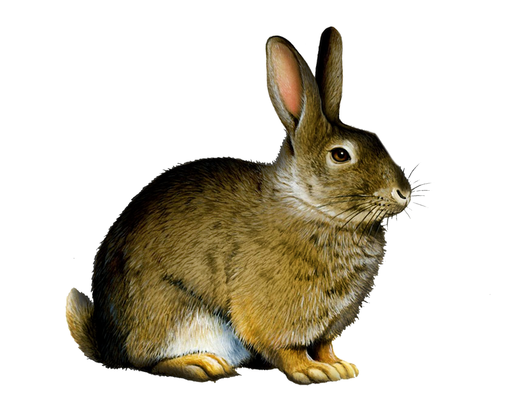 Png Rabbit by Moonglowlilly