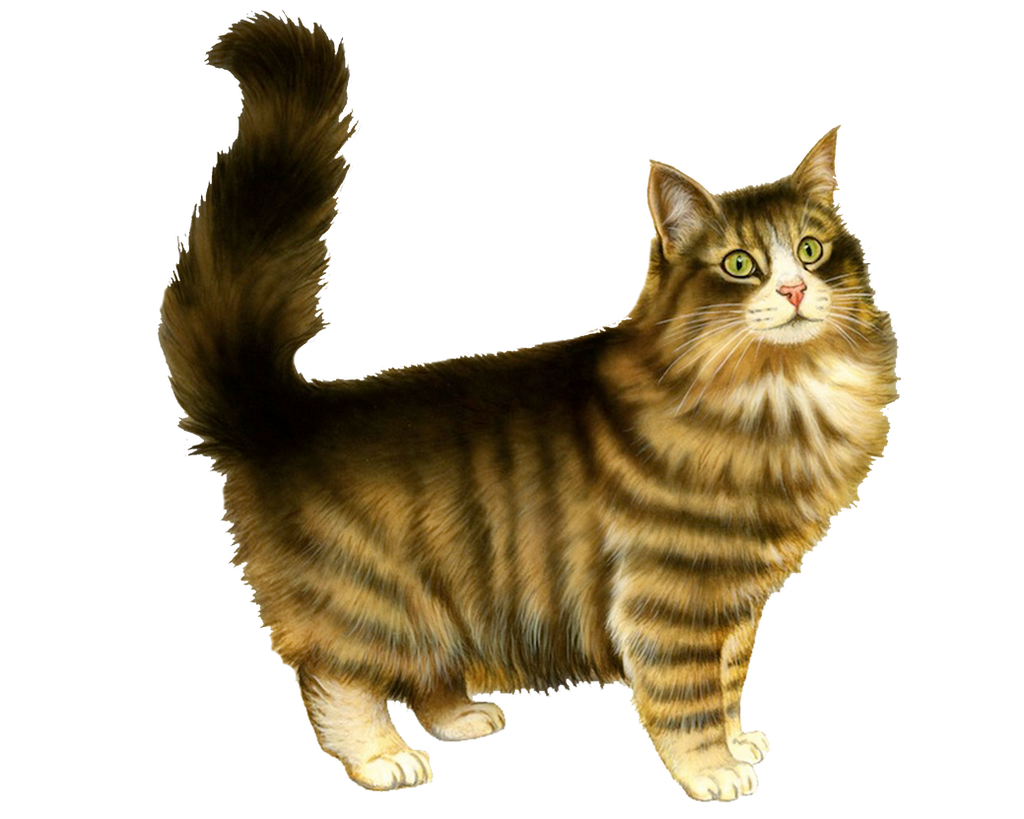 Transparent cat tumblr png cat by moonglowlilly