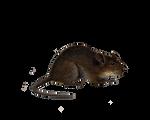 Png Rat 4
