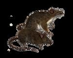 Png Rats 5