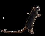 Png Rat 6