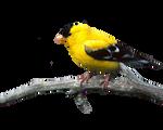 Bird Png 22