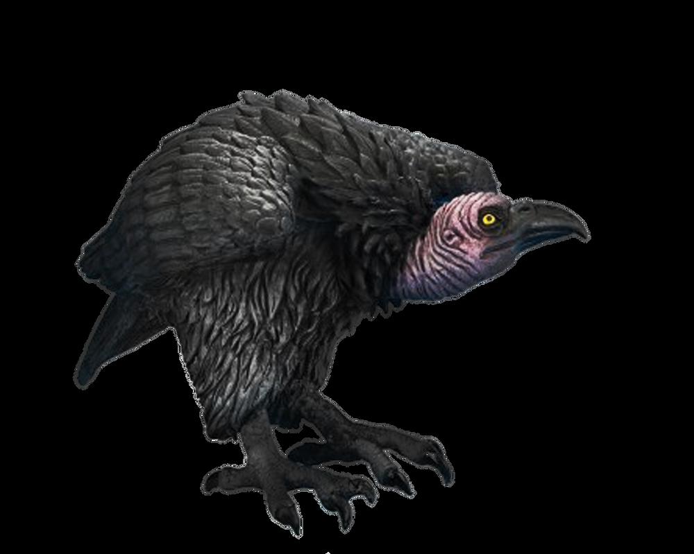 red bearded vulture wallpaper