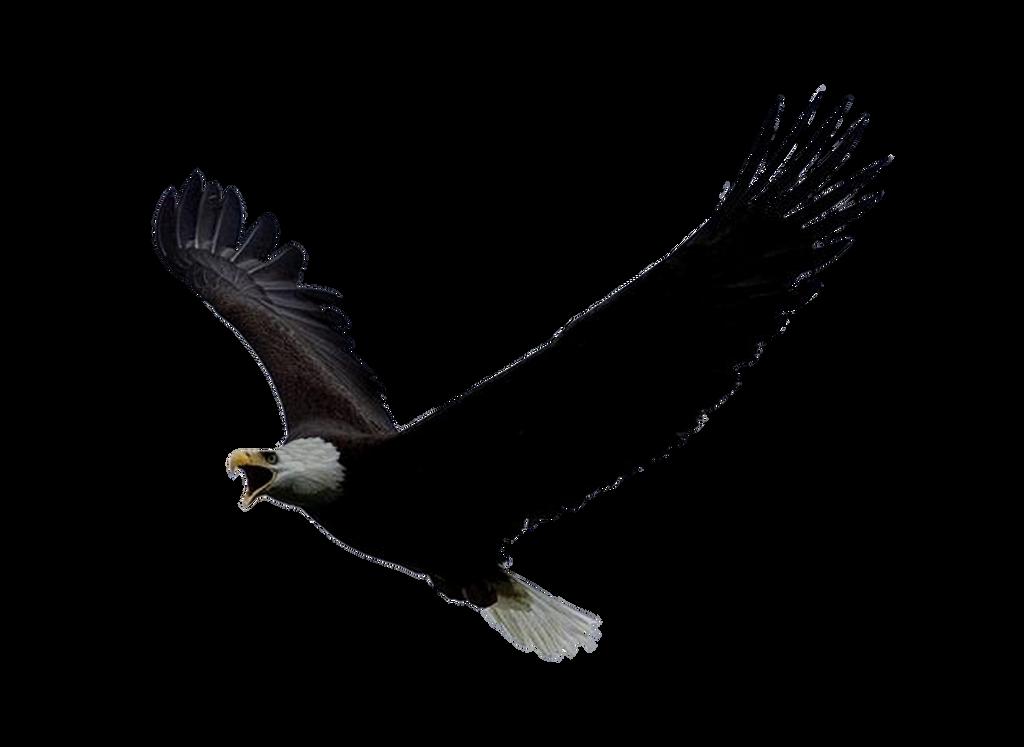 Png Eagle