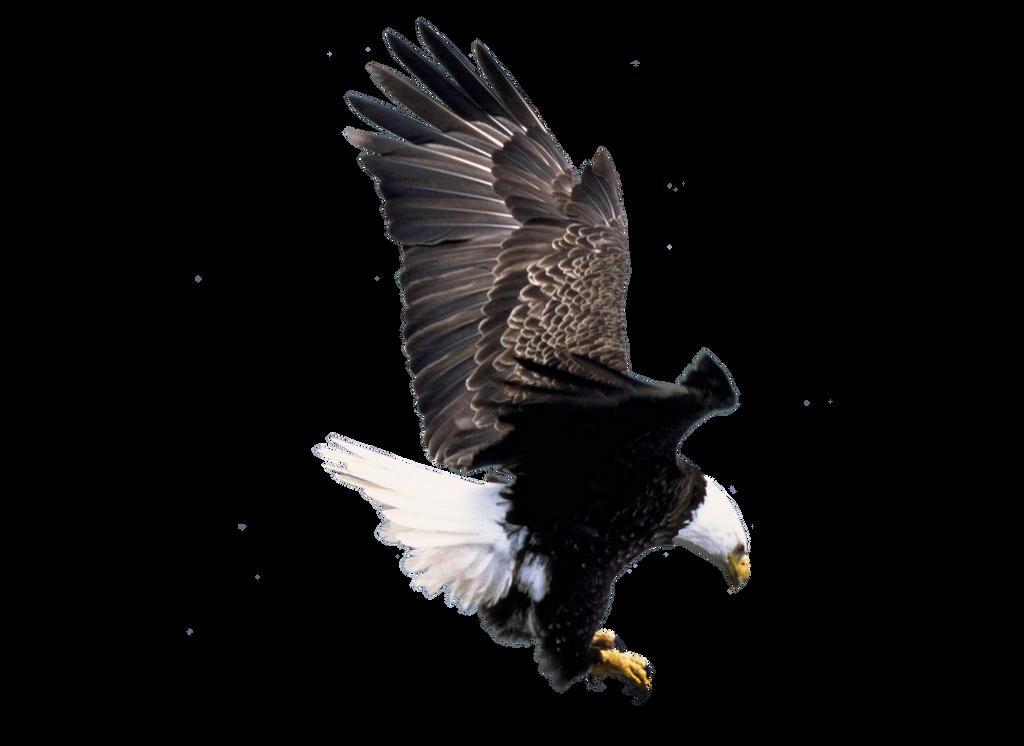 سكرابز طيور وحيوانات صور حيوانات للتصميم صور حيوانات مفرغة بدون pre_cut_eagle_2_by_moonglowlilly-d5nf4og.png