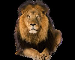 Pre Cut Lion
