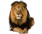 Pre Cut Lion by Moonglowlilly