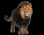 Pre-cut Lion 2