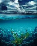 Sea Bg